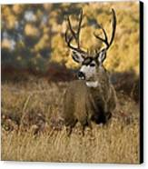The Buck Stops Here Canvas Print by Darryl Gallegos