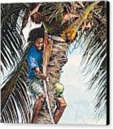 The Coconut Tree Canvas Print