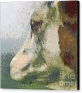 The Cow Portrait Canvas Print by Odon Czintos