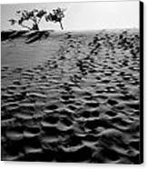 The Dunes At Dusk Canvas Print