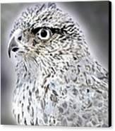 The Eye Of An Eagle  Canvas Print by Yvonne Scott
