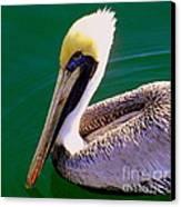 The Happy Pelican Canvas Print