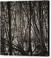 The Mangrove Canvas Print by Armando Perez