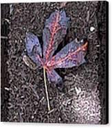 The Maple 5 Canvas Print