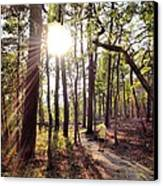 The Path Of Life Canvas Print by Joan Meyland