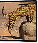 The Spotted Cat Canvas Print by Farah Faizal