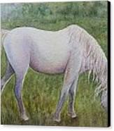 The White Horse Canvas Print by Kerri Ligatich