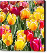 Think Spring Canvas Print by Suni Roveto