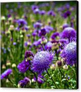 Thistle Field Canvas Print by Tamyra Ayles