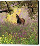 Thoroughbred Horse Among Wildflowers In The Chittering Valley, Western Australia Canvas Print by Peter Walton Photography