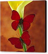 Three Red Butterflies On Calla Lily Canvas Print