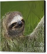 Three-toed Sloth Canvas Print by Heiko Koehrer-Wagner