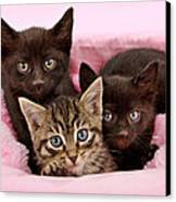 Threee Kittens In A Pink And White Basket Canvas Print