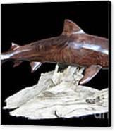 Tiger Shark Canvas Print by Kjell Vistnes