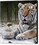 TJ  Canvas Print by Big Cat Rescue