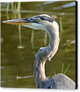 Too Close For Comfort Canvas Print by Carol  Bradley