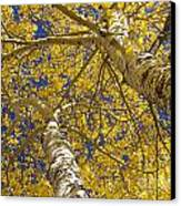 Towering Autumn Aspens With Deep Blue Sky Canvas Print by James BO  Insogna