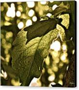 Transparent Glow II Canvas Print by Rotaunja