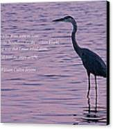 Treading Alone   Great Blue Heron  Canvas Print by Jonathan Whichard