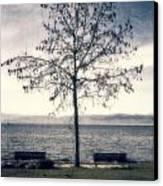 tree at lake Constance Canvas Print by Joana Kruse