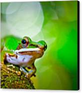 Tree Frog Canvas Print by Albert Tan photo