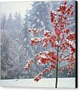 Tree In The Winter Canvas Print by Natural Selection Craig Tuttle