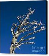 Tree In Winter Against A Blue Sky Canvas Print