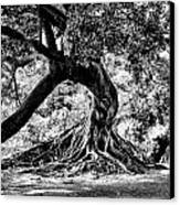 Tree Of Life - Bw Canvas Print