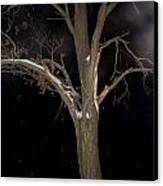 Tree On A Dark Snowy Night Canvas Print by Victoria Sheldon