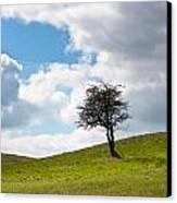 Tree Canvas Print by Semmick Photo
