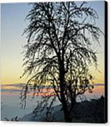 Tree Silhouette At Sunset 2 Canvas Print by Bruno Santoro
