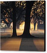 Trees In The Morning Mist Canvas Print by Jeremy Woodhouse