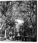 Trees On The Mall In Central Park In Black And White Canvas Print