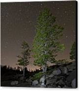 Trees Under Stars Canvas Print by Sean Duan