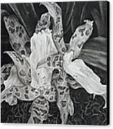 Triple Orchid Blossom Canvas Print