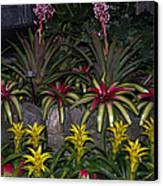 Tropical 1 Canvas Print by Wanda J King