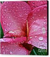 Tropical Rose Canvas Print by Susan Herber
