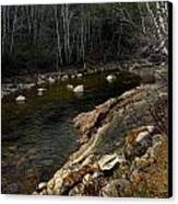 Trout Fishery Canvas Print by Skip Willits