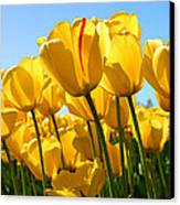 Tulip Canvas Print by Dhirendra  Jaiswal