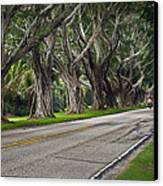 Tunnel Of Trees Canvas Print by Robert Smith