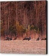 Turkey - Wild Turkey - Seventeen Longbeards Canvas Print