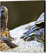 Turtle Conversation Canvas Print by Elena Elisseeva