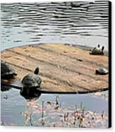 Turtle Family Beach Canvas Print by Suzanne Gaff