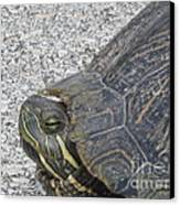 Turtle Canvas Print