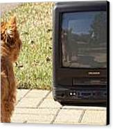 Tv Watching Dog Canvas Print by Susan Stone