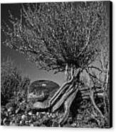 Twisted Beauty - Bw Canvas Print by Christopher Holmes
