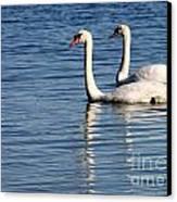 Two Beautiful Swans Canvas Print by Sabrina L Ryan