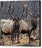 Two Bulls Canvas Print by Wade Aiken