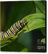 Two Caterpillars Canvas Print
