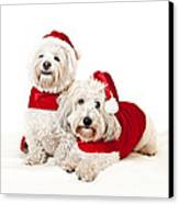 Two Cute Dogs In Santa Outfits Canvas Print